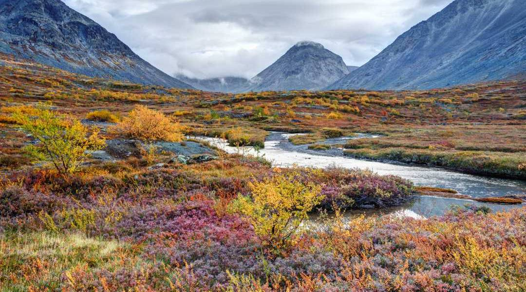 wycieczka tundra