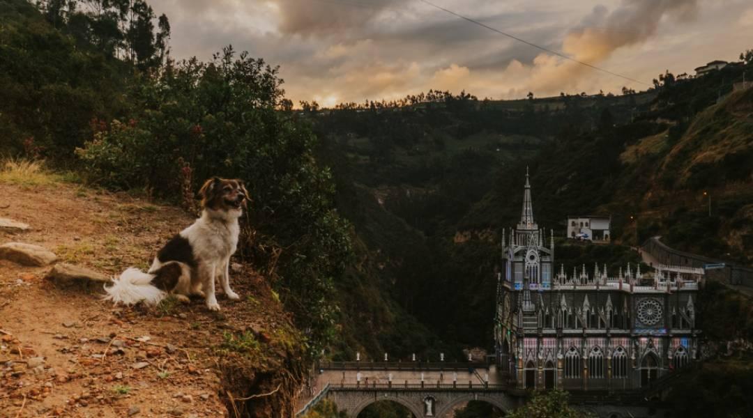 gdzie wyjechać z psem za granicę