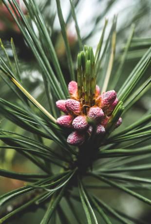 rośliny w tatrach