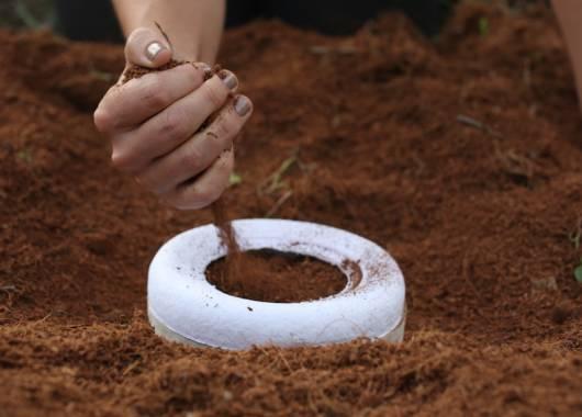 Fot. Bios Urn sprawia, że ludzkie ciało po śmierci zamienia się w drzewo; materiały prasowe