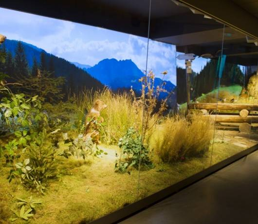 atrakcje zakopane centrum tatrzanski park narodowy