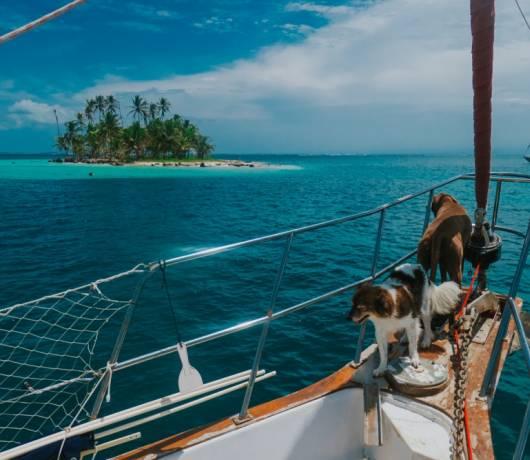 jak podróżować z psem
