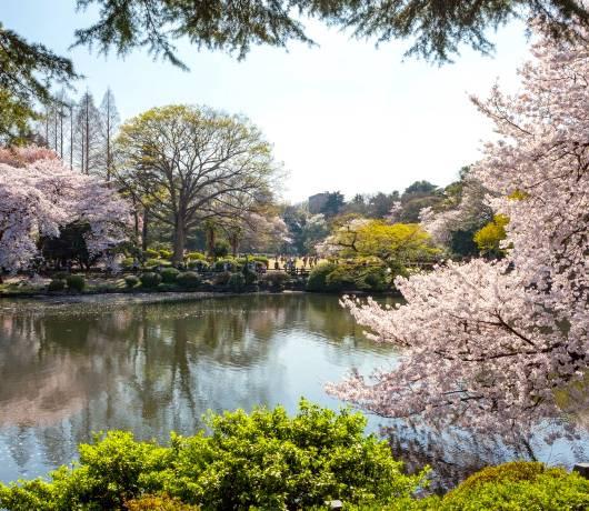 Skrzyżowanie w Tokio i tokijski Park Narodowy Shinjuku Gyoen