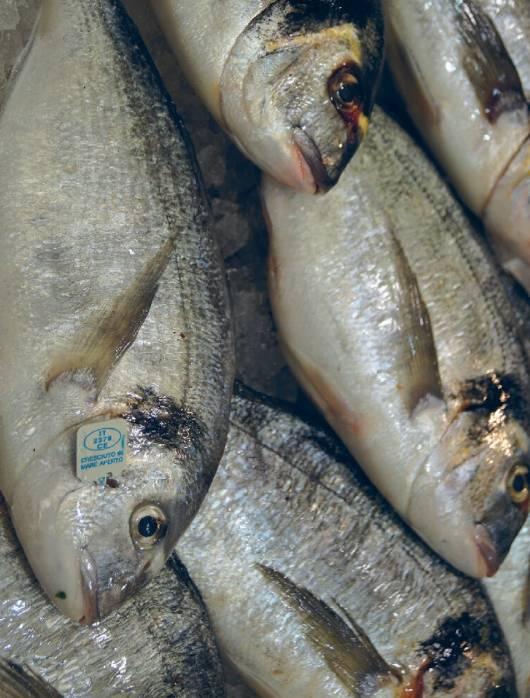 wlochy targ marceto orientale ryby