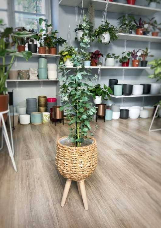 sklep z roślinami lolaflora