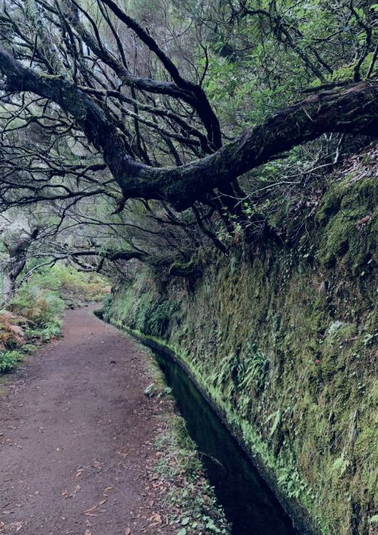 przyroda Madery