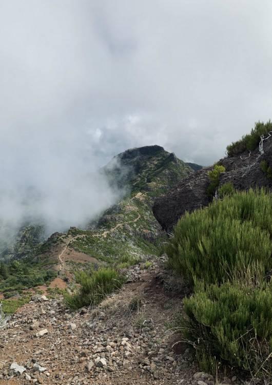 Pico do Ruivo Madera