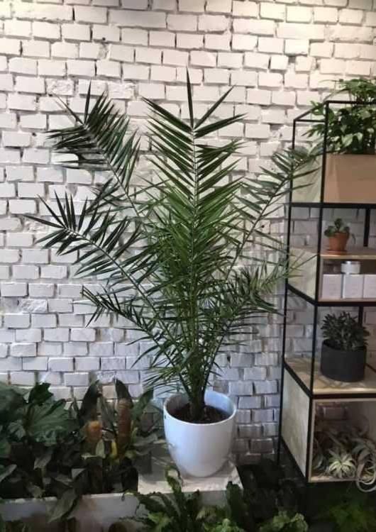 sklep z roślinami roślinka