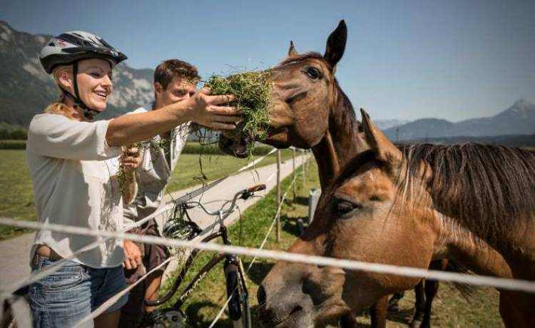 austria aktywnie z końmi