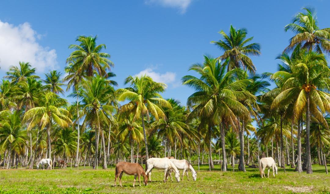 brazylia ciepłe kraje w lutym