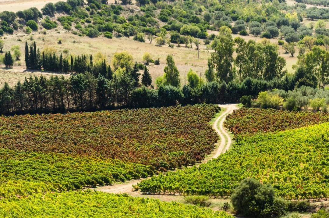 Sardynia co warto jeść i pić wino