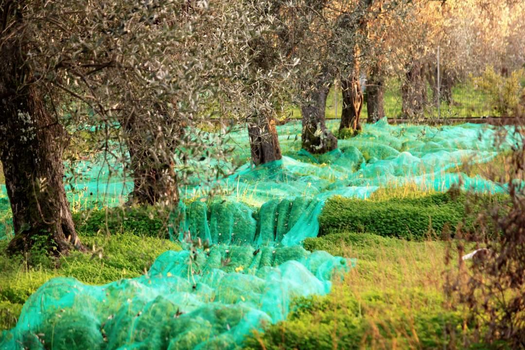 Sardynia co warto jeść oliwki