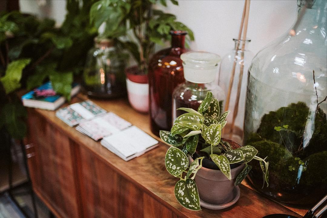 sklep z roślinami lunula
