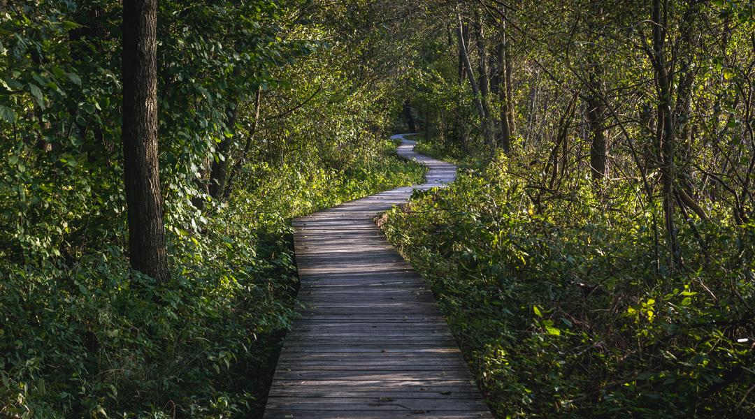 najpiękniejsze lasy w polsce - puszcza kampinowska