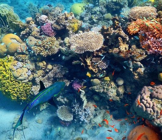 rafa koralowa w morzu czerwonym
