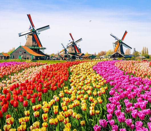 holandia urlop w kwietniu