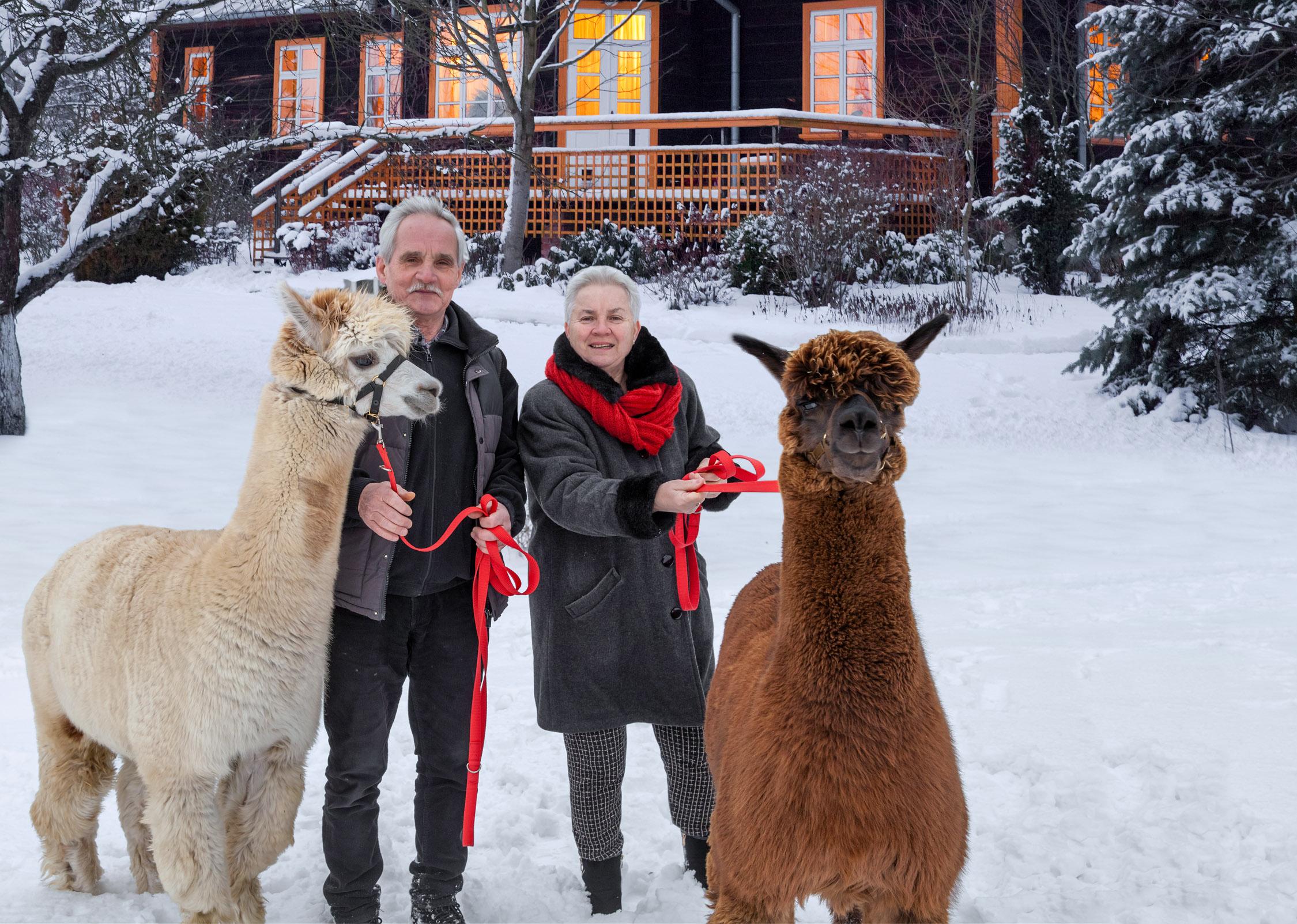 Alpakarium w Rudce – z wizytą w agroturystyce i hodowli alpak na Podlasiu