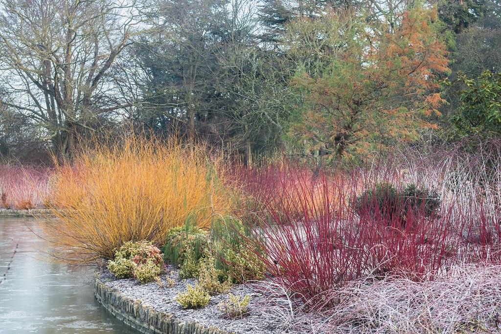 Zima w ogrodzie: Wisley pod Londynem